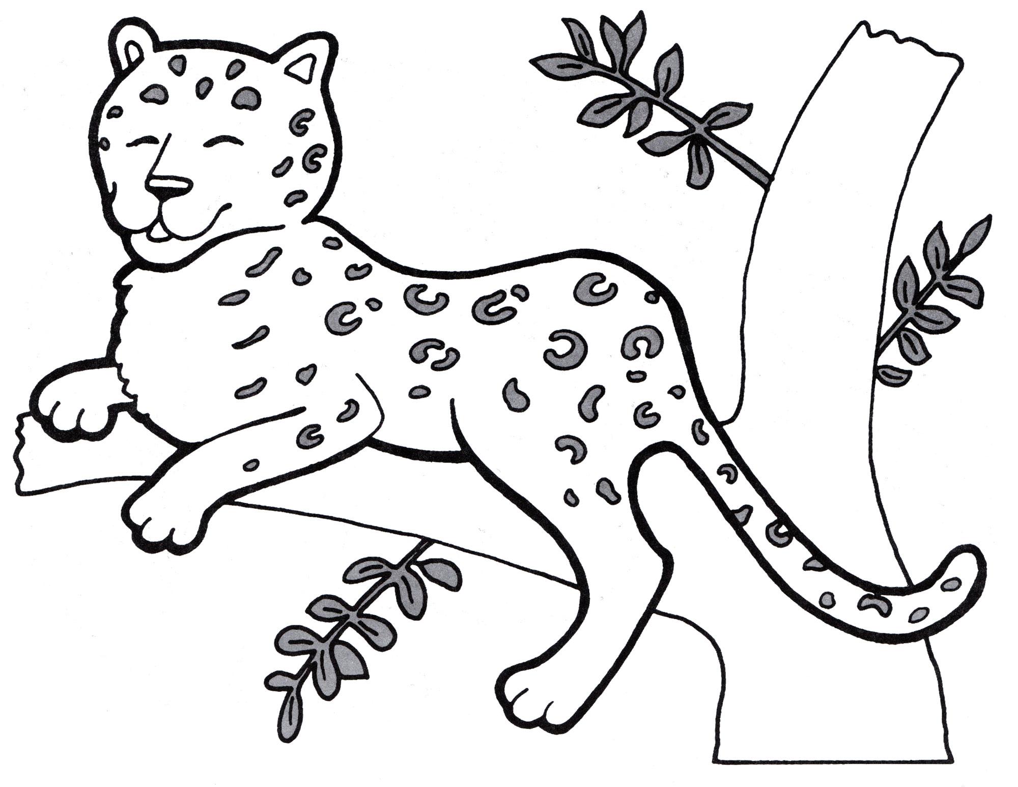 Раскраска Гепард на дереве - распечатать бесплатно