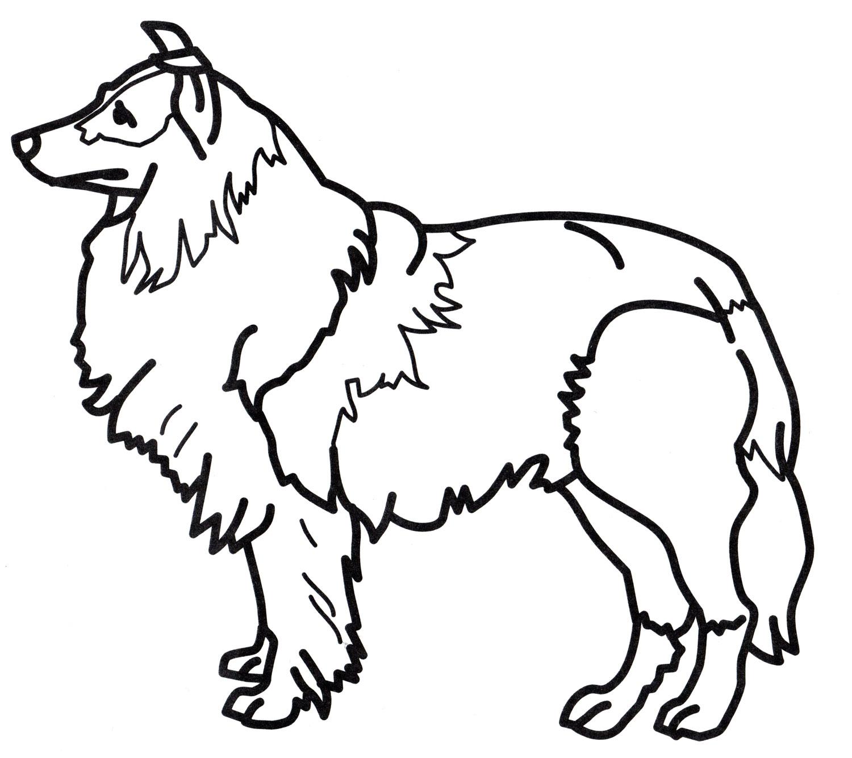 Раскраска Пушистая собака - распечатать бесплатно