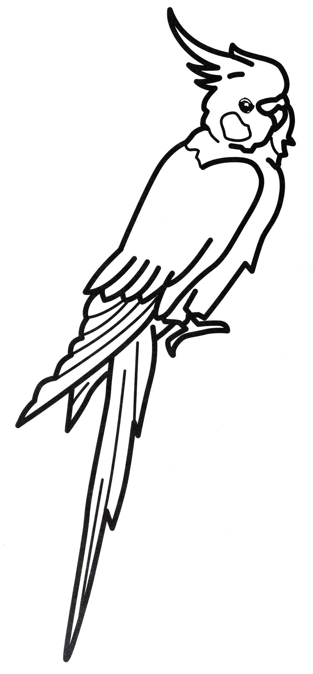 раскраска попугай с хохолком распечатать бесплатно