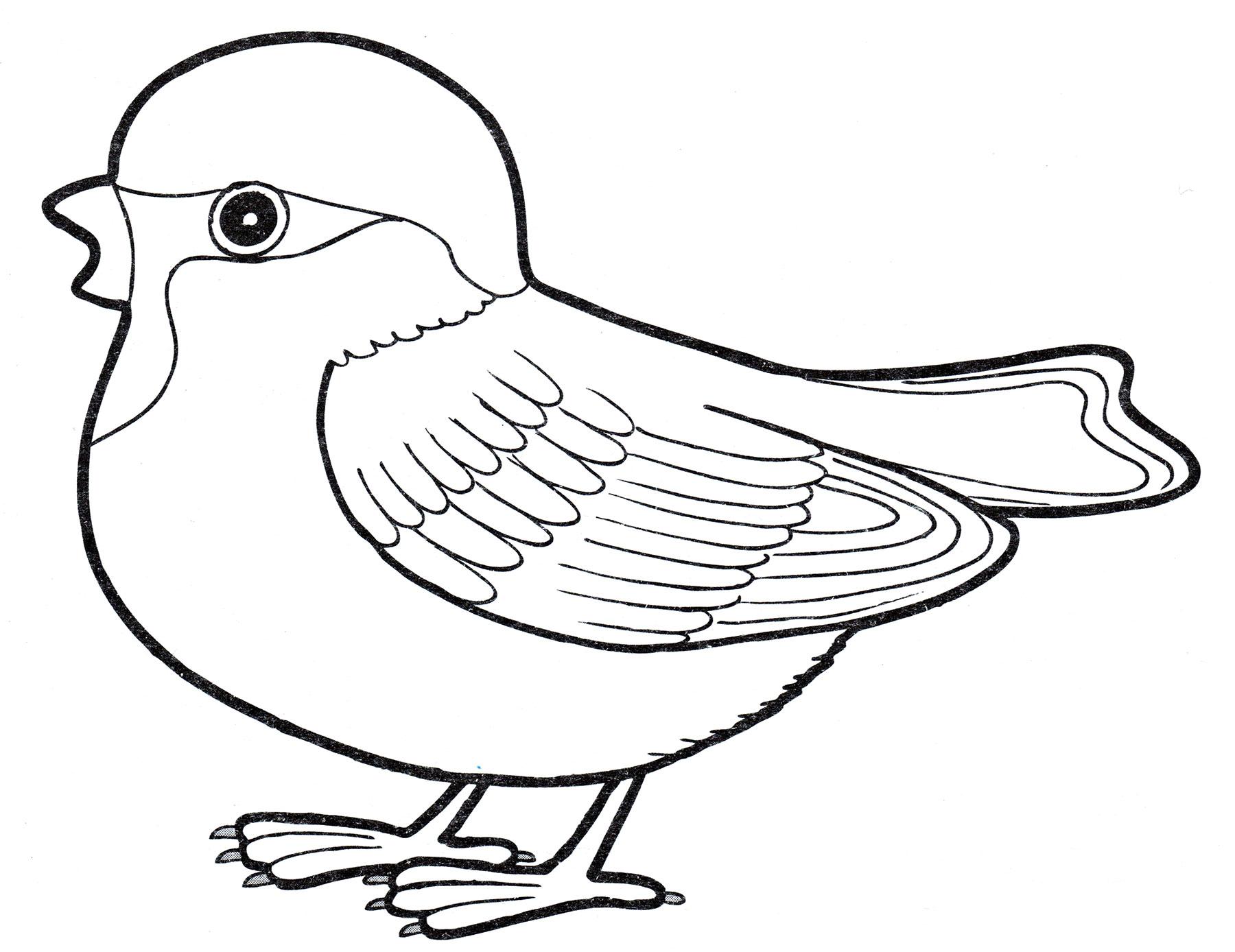 Раскраска в картинках птицы для детей