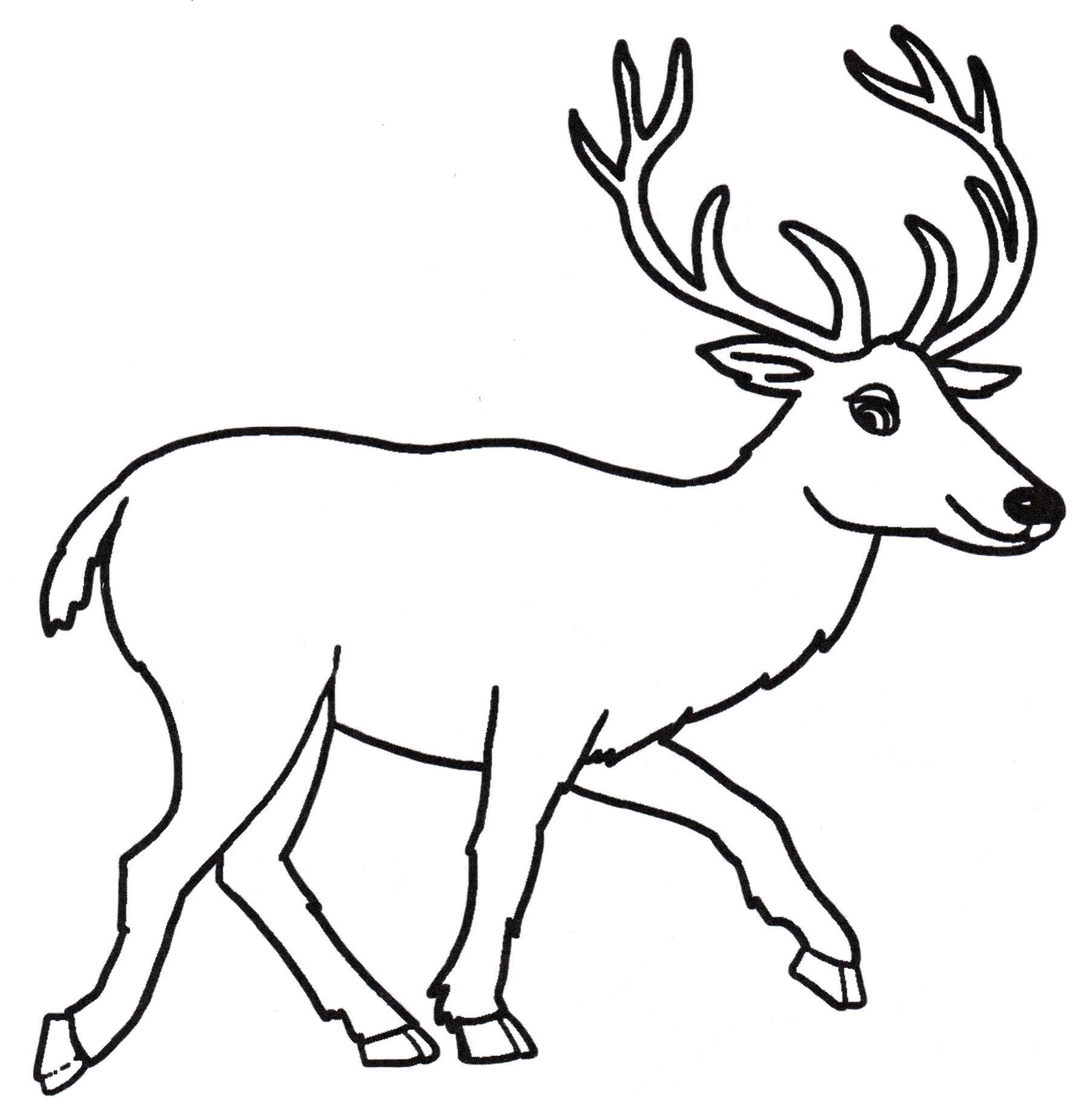 Раскраска Рогатый олень - распечатать бесплатно