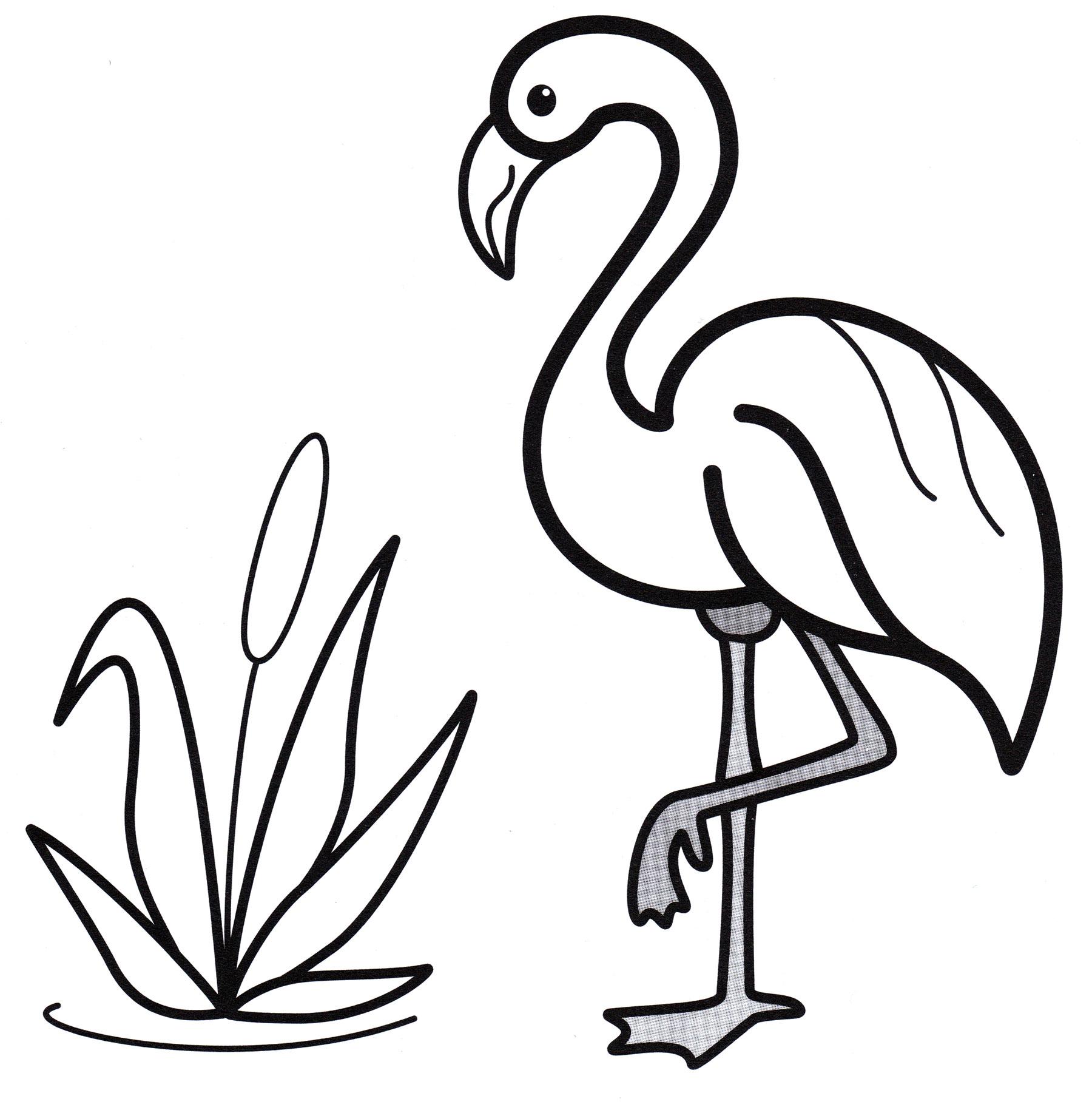Раскраска Фламинго и камыш - распечатать бесплатно