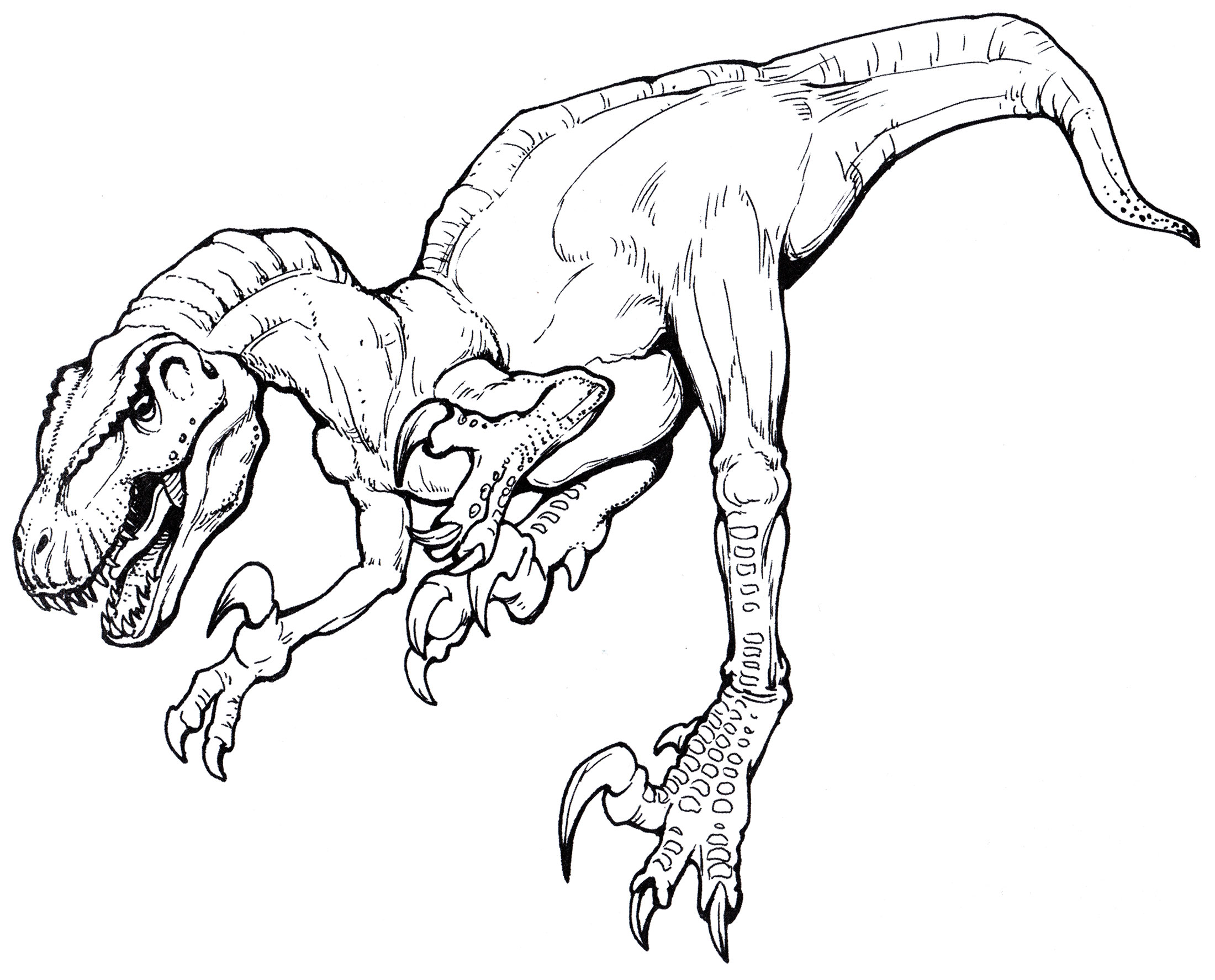 Раскраска Мегараптор   Раскраски динозавры