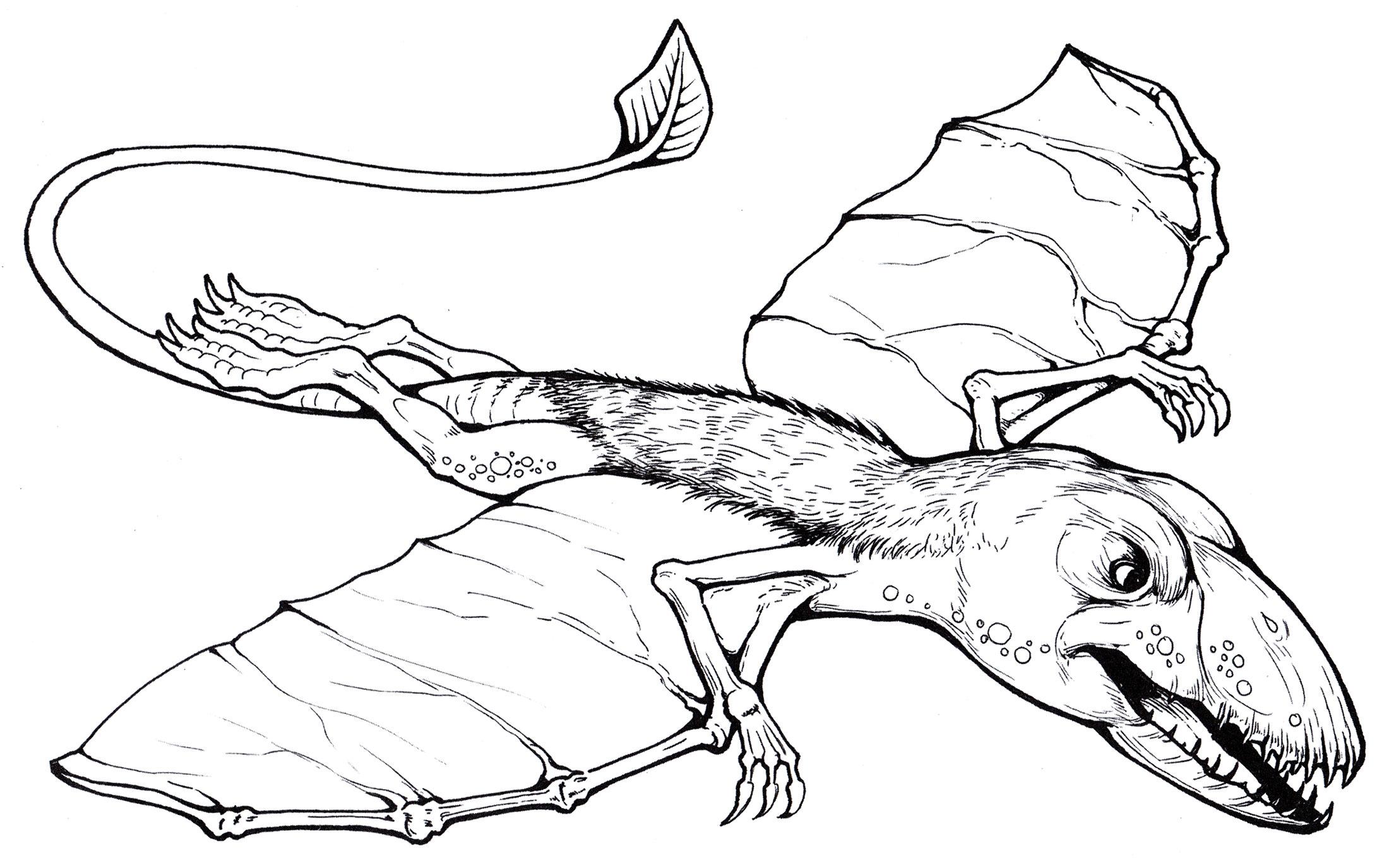 того, раскраска летающие динозавры поднялись
