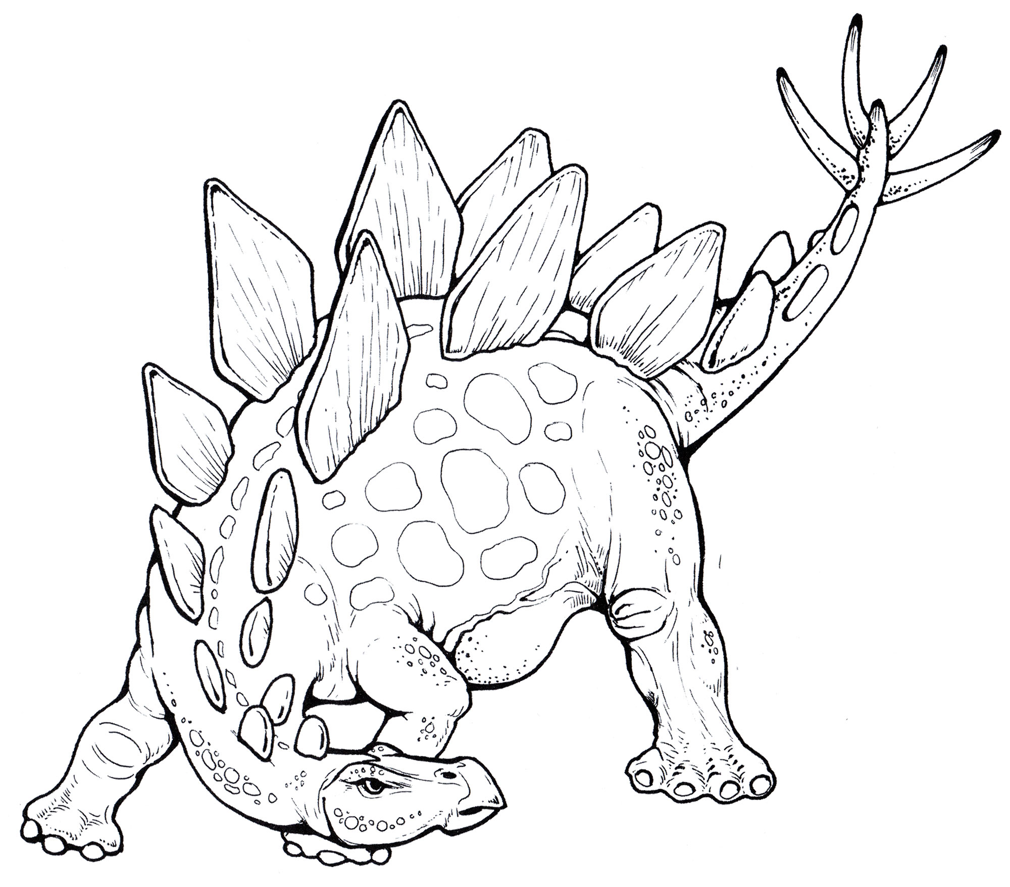 Раскраска Стегозавр   Раскраски динозавры