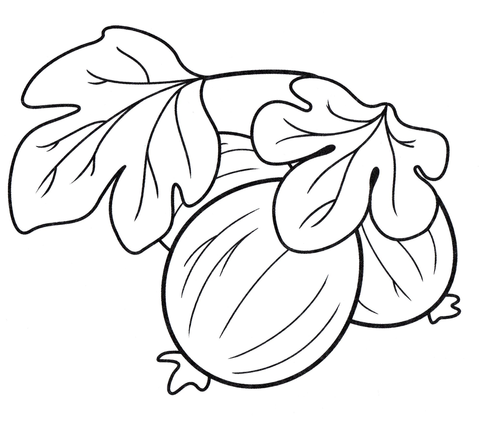 Раскраска Ягоды крыжовника - распечатать бесплатно