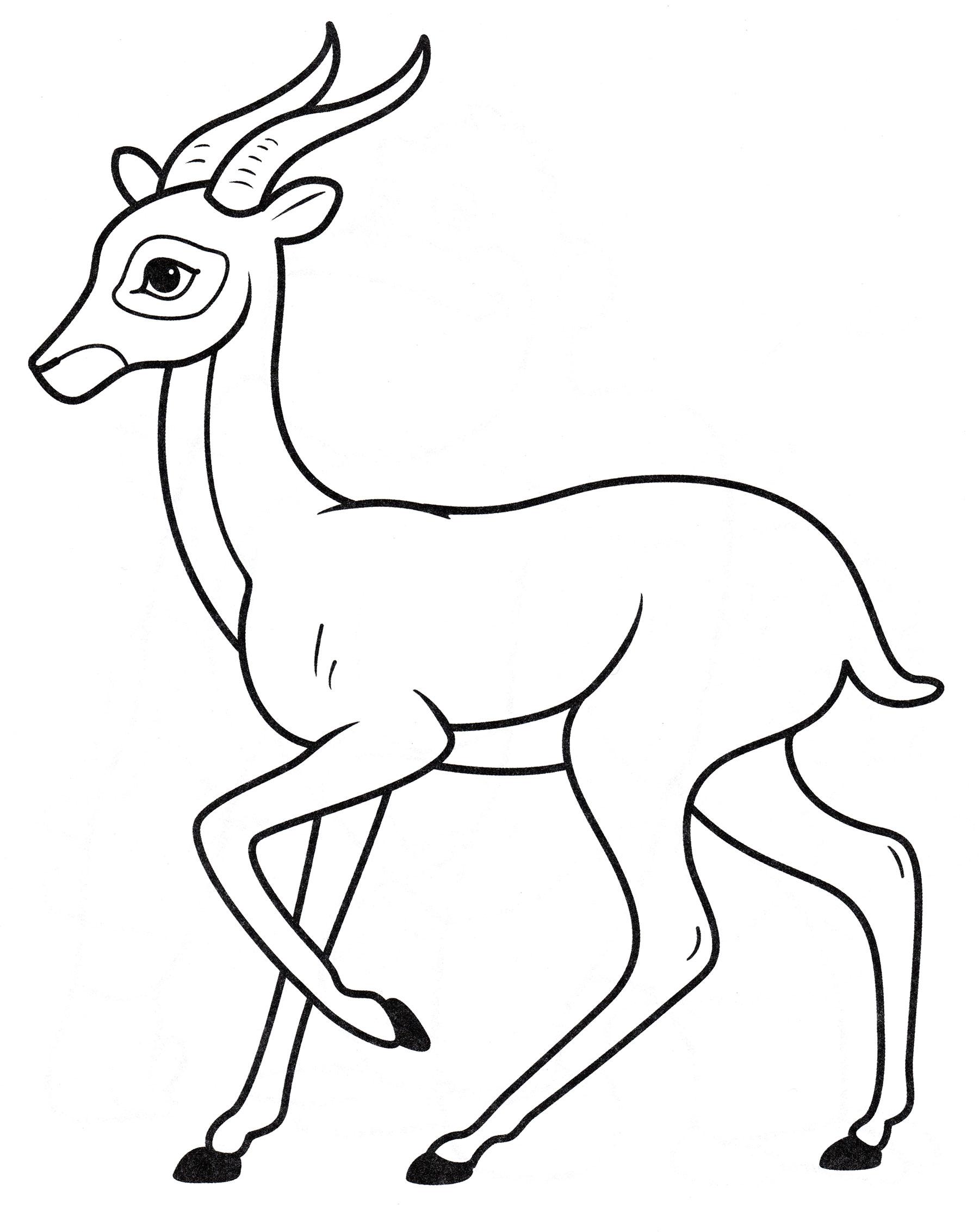 Газель животное рисунок