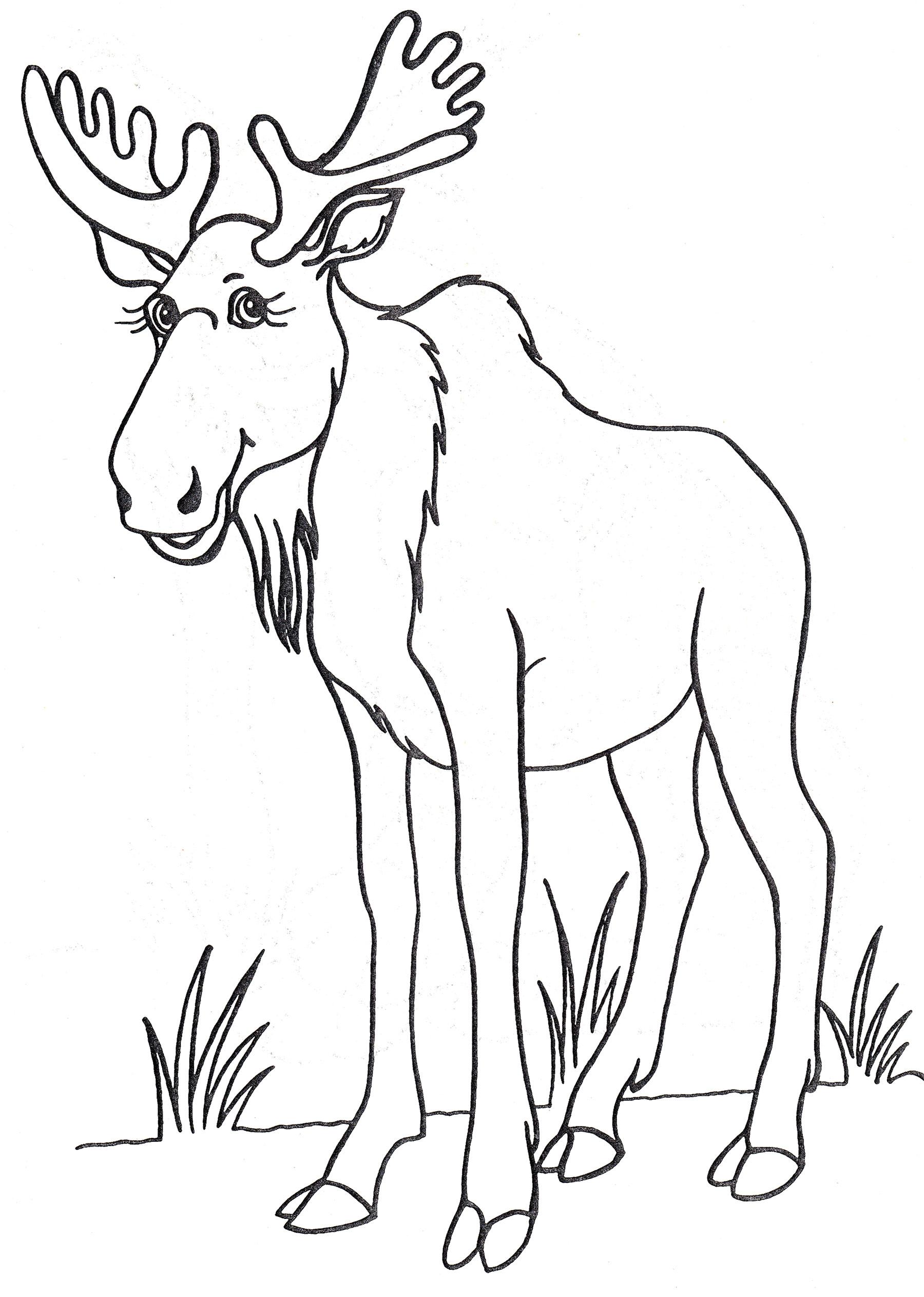 Раскраска Лось на лугу - распечатать бесплатно