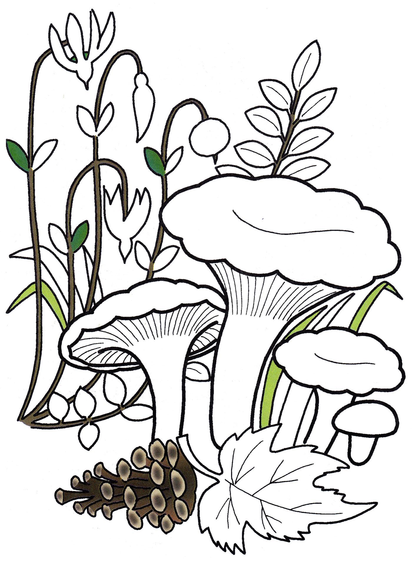 Раскраска Лисички в лесу - распечатать бесплатно