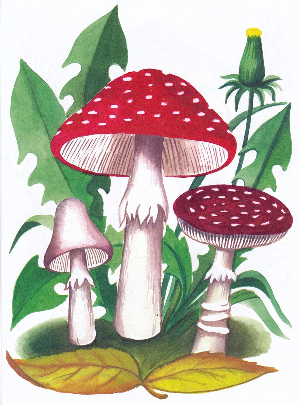 Раскраска Мухоморы в лесу - распечатать бесплатно