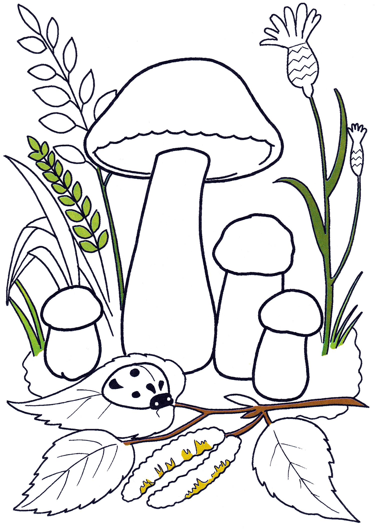 Раскраска Подосиновики в лесу - распечатать бесплатно