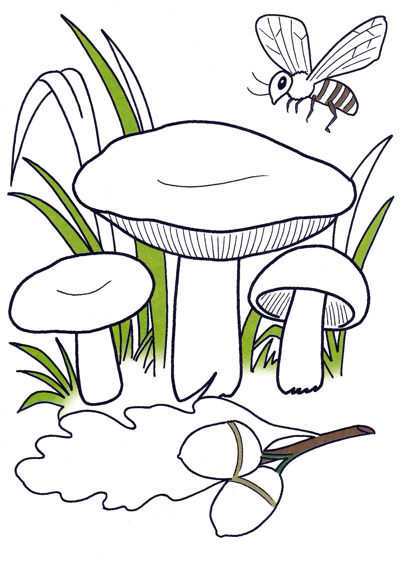 Раскраска Сыроежки в лесу - распечатать бесплатно