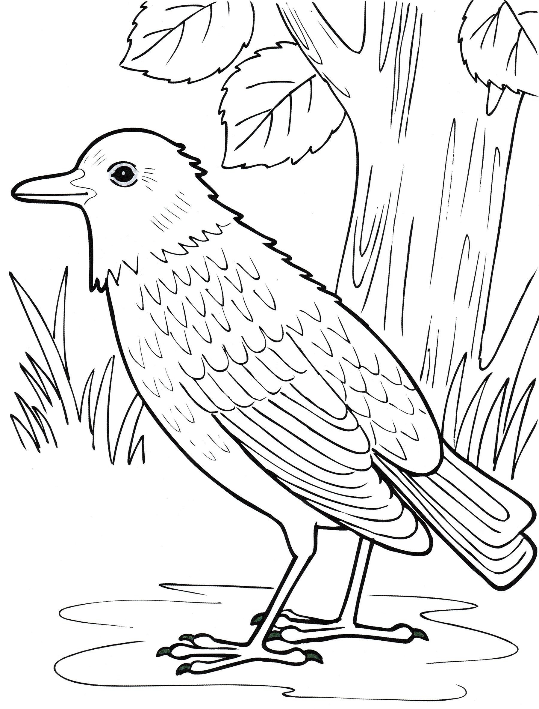 перелетные птицы печатать говорит том