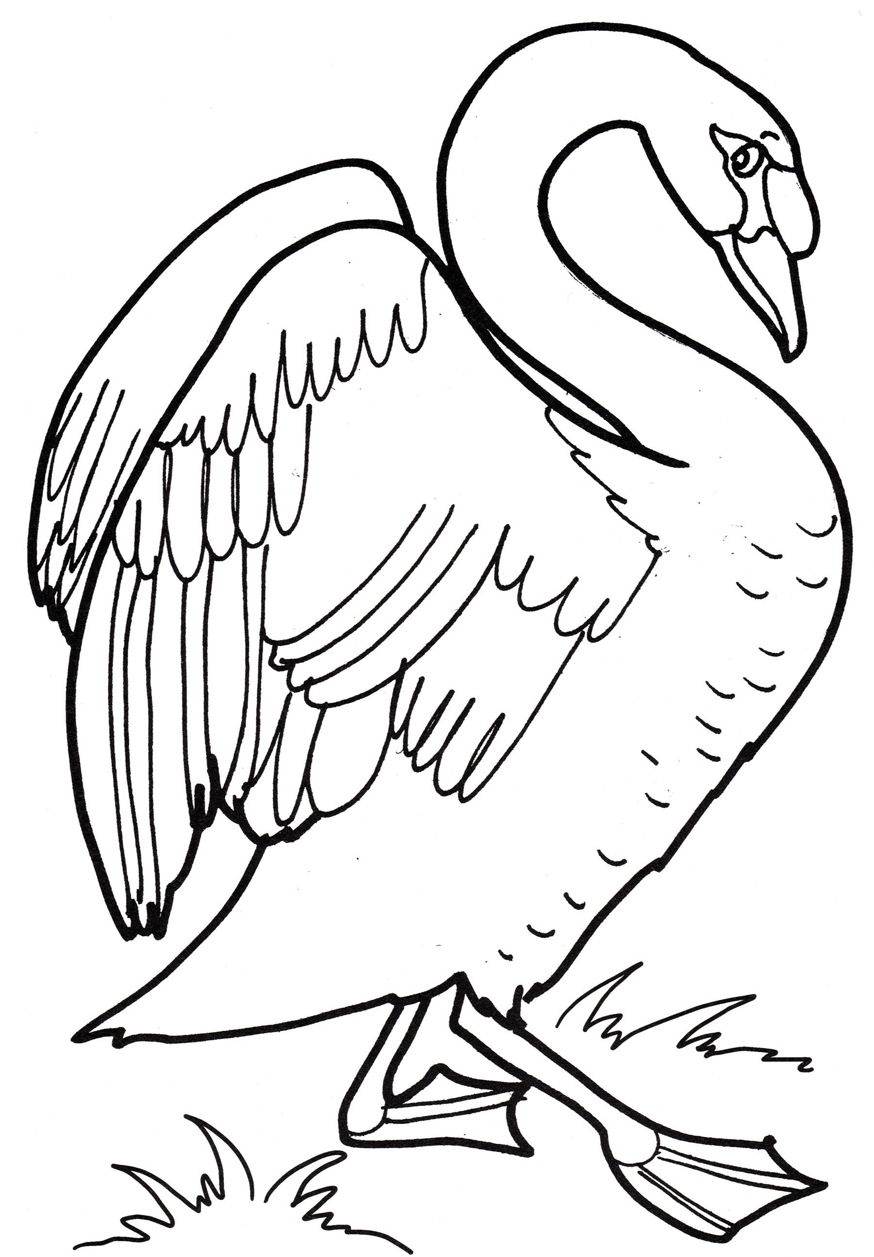 Раскраска Грациозный лебедь - распечатать бесплатно