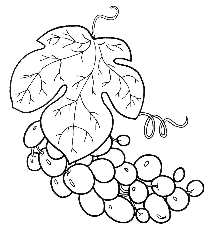 Раскраска Гроздь винограда - распечатать бесплатно