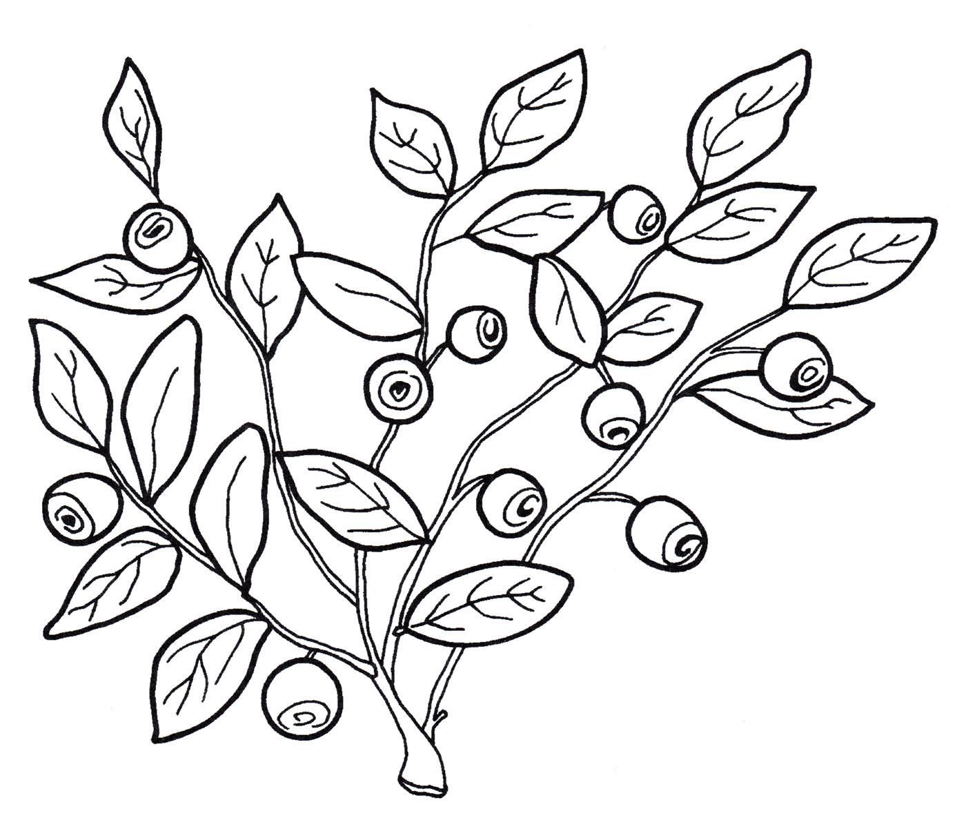 раздал картинки для рисования голубика внутренние, внешние факторы