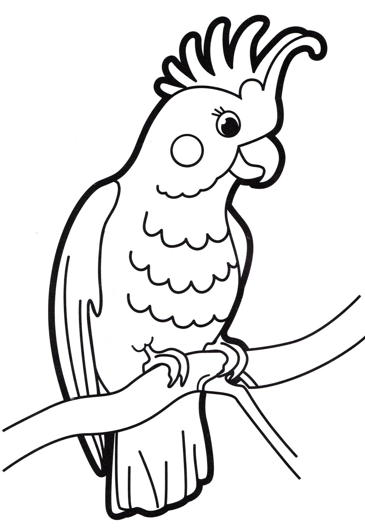 Раскраска Попугай на ветке - распечатать бесплатно