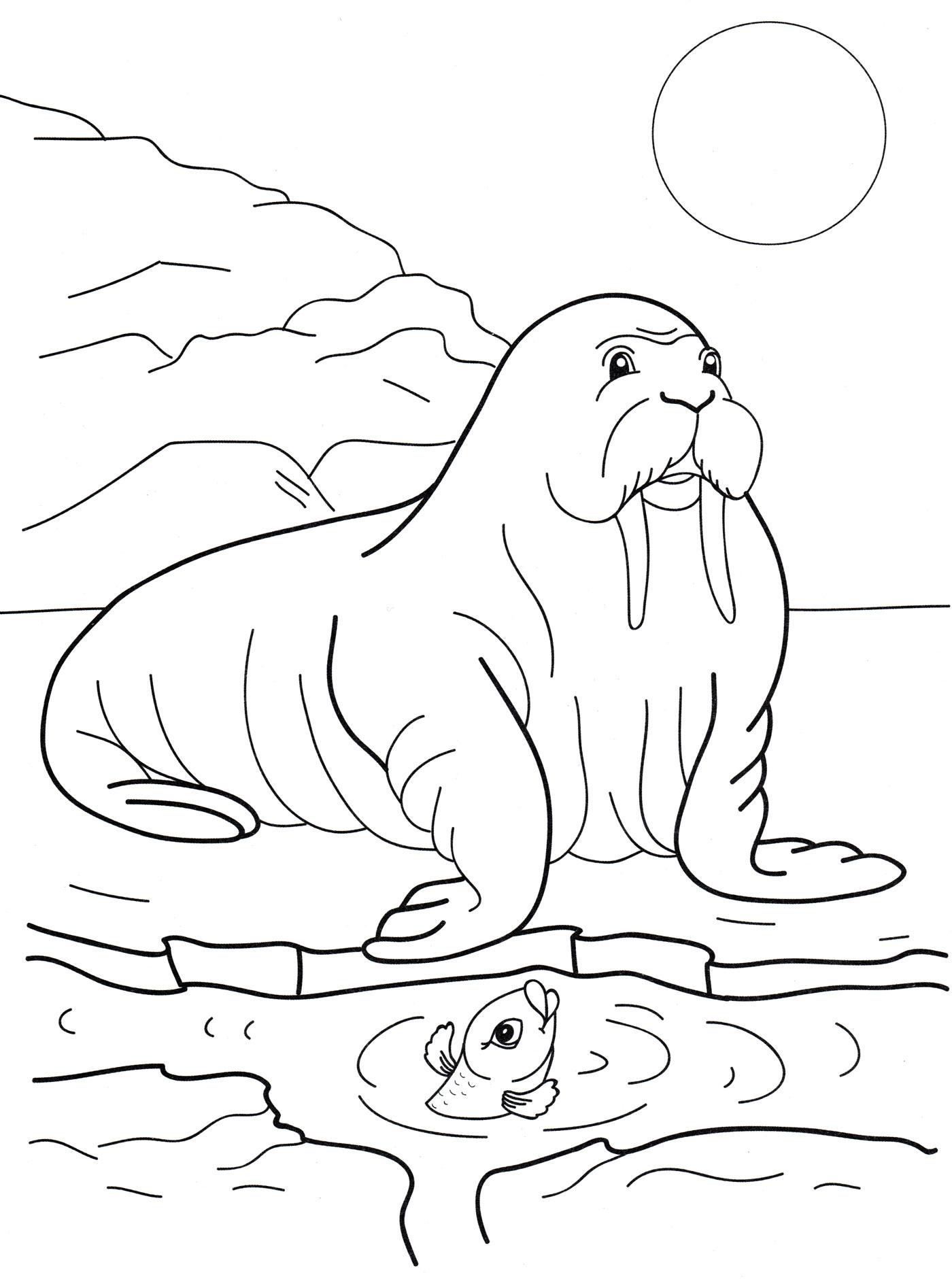 картинка животные севера распечатать пластичная фактура