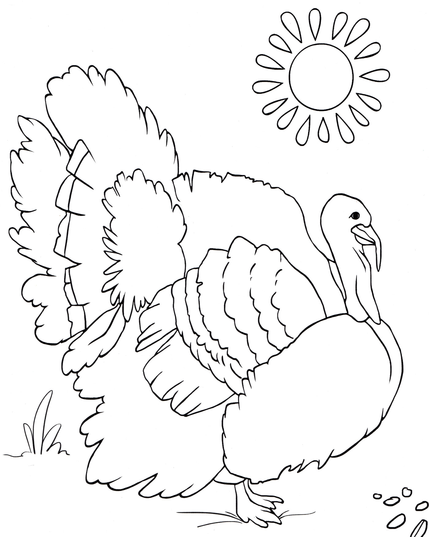 раскраска индюк на солнце распечатать бесплатно