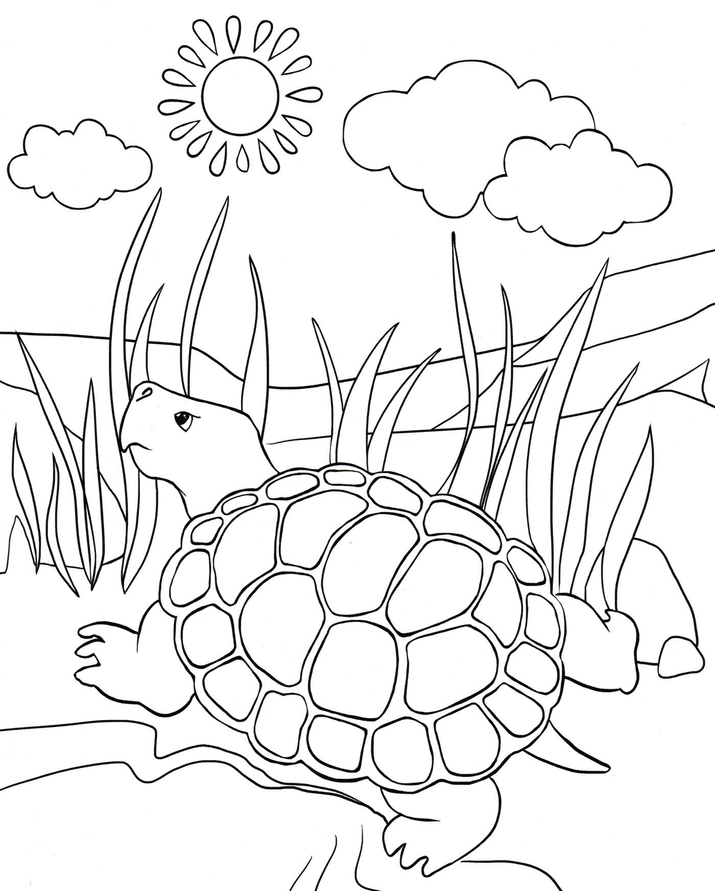 Раскраска Черепаха греется на солнце - распечатать бесплатно