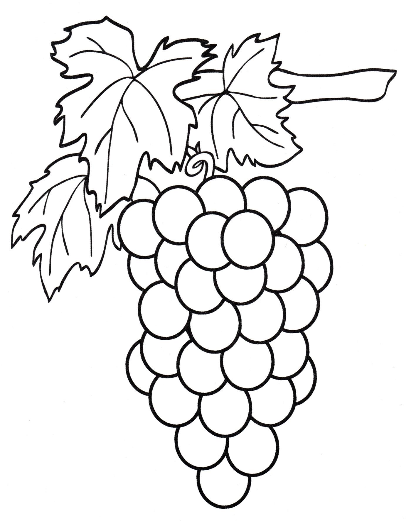 Раскраска Гроздочка винограда - распечатать бесплатно