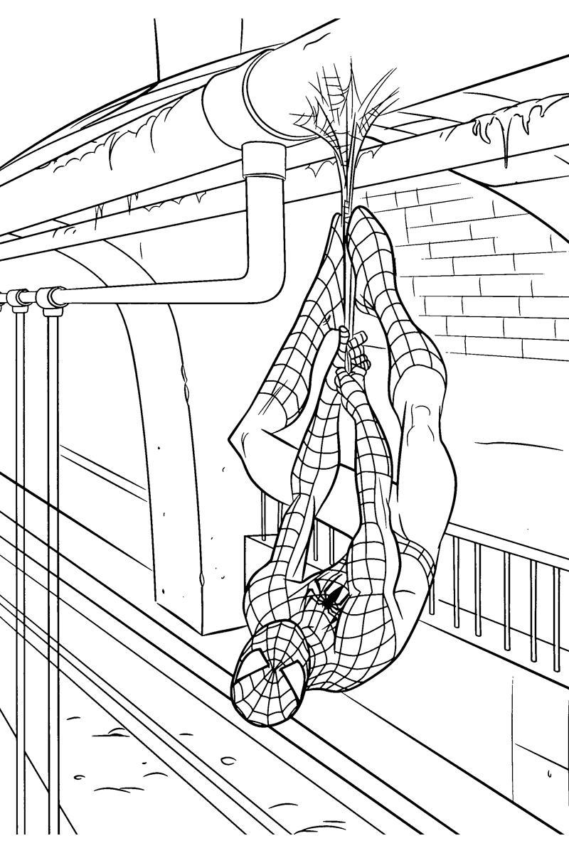 Раскраска Человек паук висит на паутине - распечатать ...