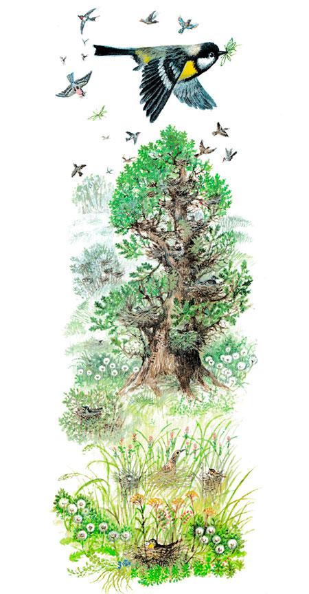 Синичка летит над лесом