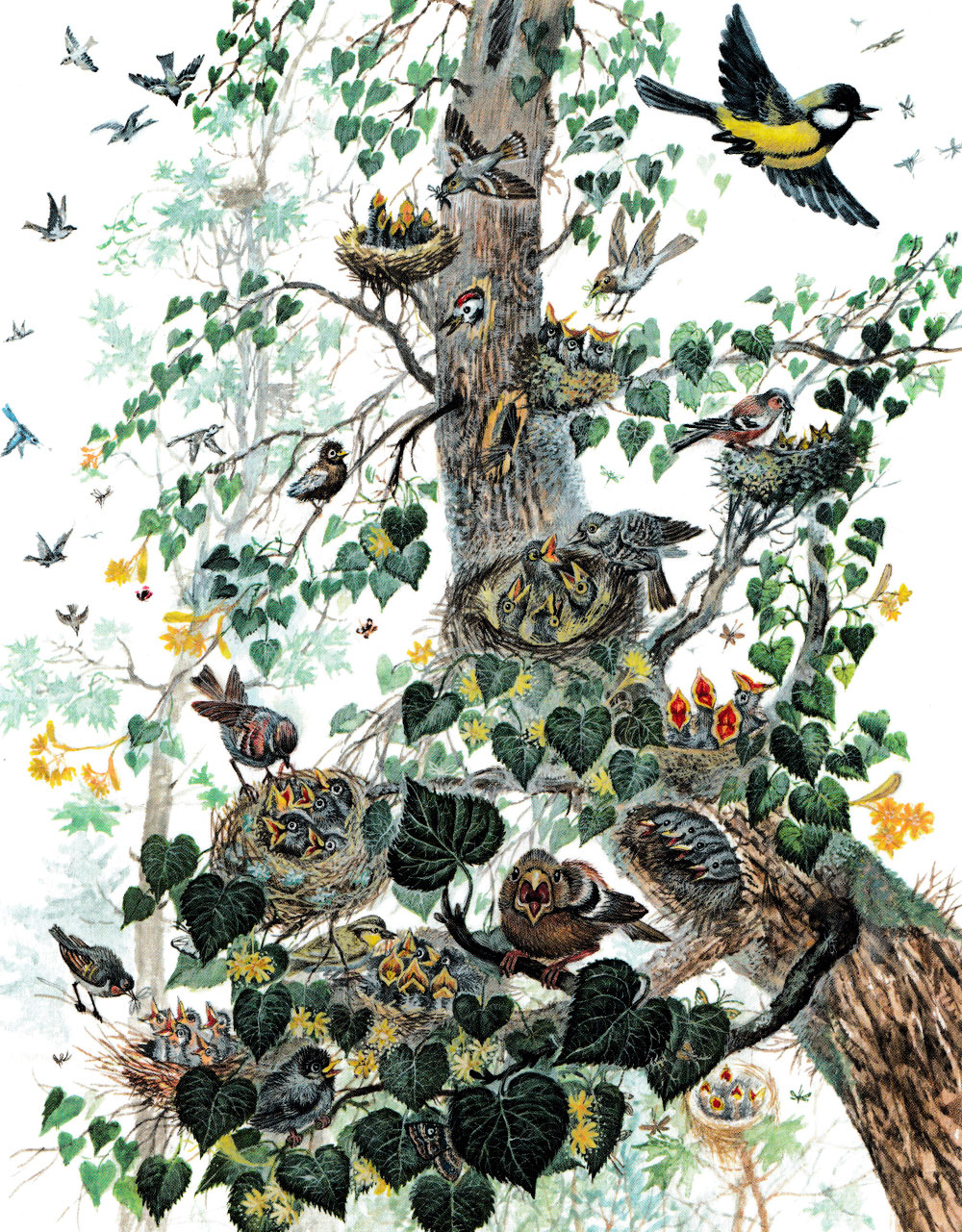 Птенчики в гнездах на дереве