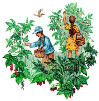 Ребята собирают малину