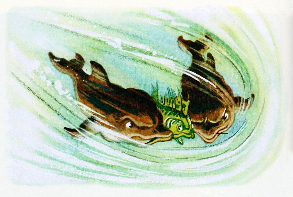 Дельфины схватили ерша