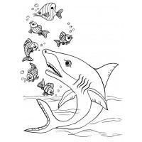 Раскраска Акулы плавают в море - распечатать бесплатно
